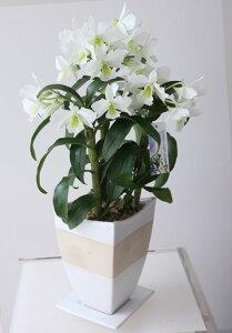 只今デザイン陶器鉢のお色は白色です