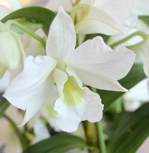 白とグリーンがきれいな美人さんです