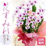 ボリューム満点スミレの様な可憐な花がたくさん咲き誇る姿は本当に見事です!