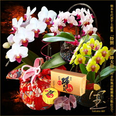 母の日和菓子と花のセット 楽天通販おすすめ送料無料詰め合わせはコレ