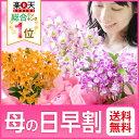 【母の日ギフト2016】予約早割中!お母さんにいつもと違うお花を贈りたい!『思いやりいっぱいの…