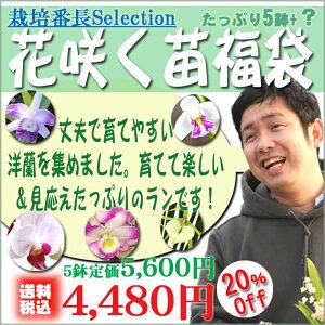 栽培番長宮川がちょっと危険な洋蘭の世界に誘う5鉢 福袋!育てやすさ、見ごたえを軸に洋ランを...