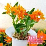 元気なビタミンカラーのオレンジが特徴