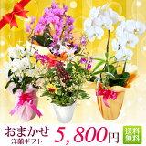 ご予算5000円(税別)でご用途に応じた最適なお花を私どもがお選びします。全国送料