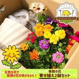 【新型コロナウイルスチャリティープロジェクト】元気な花で笑顔の花を咲かせよう!心もリフレッシュ『季節の花寄せ植え2鉢セット』季節の花苗と鉢や土、肥料すべて入った寄せ植えセット送料無料