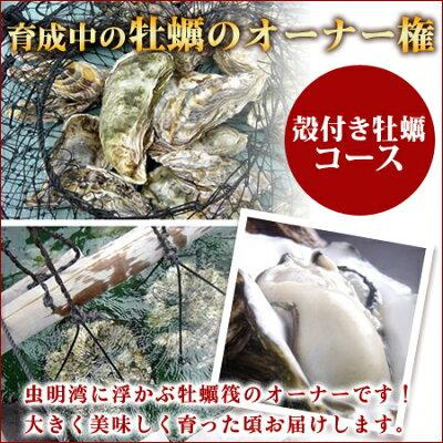 「あなたの牡蠣を育てます!」食べる楽しみだけではなく自分の牡蠣が育つ楽しみ気分はまるで虫明湾に浮かぶ牡蠣筏のオーナーです!大きく美味しく育ったころでお届けします。一口牡蠣筏オーナー権(殻付き牡蠣コース)最低殻付き牡蠣50個を保証します。