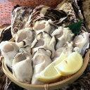 【送料無料】お買い得岡山虫明産 曙牡蠣 かきむき身(生食用)約1kg×1袋(海鮮/貝/牡蠣/生かき/カキオコ/岡山/お歳暮)10P01Nov14 - モリ旬