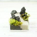 超ミニ8cm溶岩石手のひらサイズ苔テラリウム完成品現物苔盆景テラリウム気孔石
