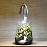 植物のための そだつライト GENTOS LEDスポットライトボトルテラリウム 苔テラリウム 苔盆景にも
