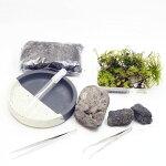 信楽焼の苔盆景 溶岩石 苔が選べる 作成キット12cm すぐに始められるピンセット付き!苔テラリウム