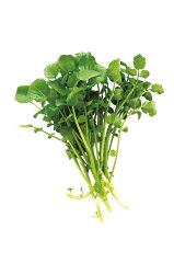 【クレソン 種 タネ たね】クレソンの種 栽培キット 水耕栽培 水栽培 苗 mas07【定形外…