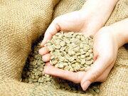 リントンマンデリン インドネシア リントン・ニフタ スペシャルティコーヒー コーヒー Mandhering マンデリン