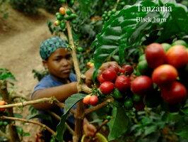 2014年新豆★タンザニアキリマンジャロ/ブラックバーン農園AAフレンチロースト200g【スペシャルティコーヒー】
