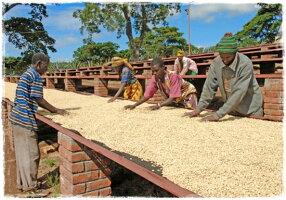 新豆★タンザニアキリマンジャロ/ブラックバーン農園フレンチロースト200g【スペシャルティコーヒー】