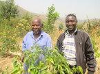 【送料無料】新豆★ルワンダ ニャミラマ フレンチロースト 800g|rwanda|RWANDA|中煎り|【組み合わせ自由!コーヒー豆800g以上ご注文で送料無料】
