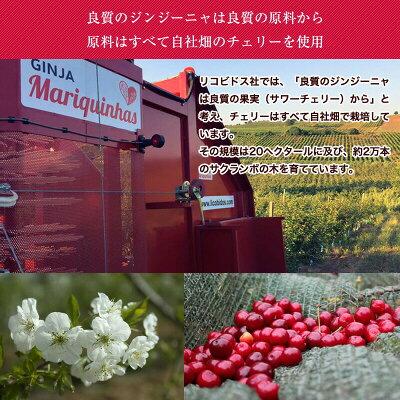 ジンジーニャ(さくらんぼのリキュール、果実入り)500ml