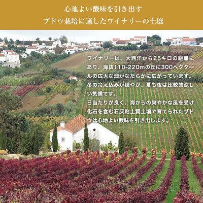 アズレージョ・ティント【赤】750mlポルトガルワイン辛口赤ワイン王国掲載