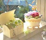 【プリ・トリム】プリザーブドフラワーギフト&観葉植物のお店ムニュムニュ【FlowerMunyuMunyu】