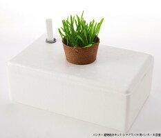 バンカー植物給水キット