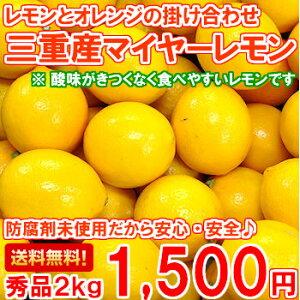 送料無料!安心・安全の国産レモンを毎日の食卓に♪1月7日以降の発送となります!【送料無料】...