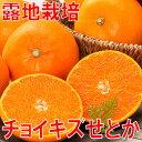 送料無料 訳あり せとか【送料無料】愛媛産チョイキズせとか3kg至高の柑橘と呼ばれる「せとか...