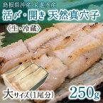 活〆・開き 天然真穴子 (生・冷蔵) 大サイズ 250g (1尾) 島根県山陰沖産 送料無料