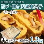 活〆・開き 天然真穴子 (生・冷蔵) 中サイズ 1.3kg (8〜10尾) 島根県山陰沖産 送料無料