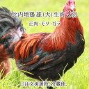 比内地鶏 雄 大型 2羽 生肉(正肉 約2.8kg・もつ 約340g・ガラ 約1.2kg) 秋田県大仙市産 むね/もも/ささみ/せせり/手羽先/皮/ハツ/レバー/砂肝/ガラ他 送料無料