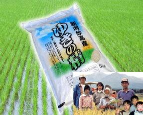 25年度産 新米最高評価「特A」5kg新潟県妙高より農家直送でお届けします。湧き水で育った1等米...