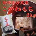 新潟県こがねもち5kg(餅米) 「29年産 新米」 美味しいお米(もち米です)