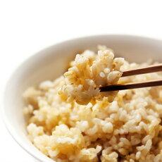 キヌヒカリの玄米