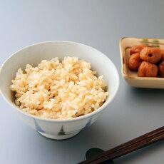 つきあかりの玄米