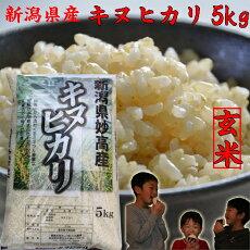 キヌヒカリの袋(玄米)