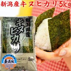 キヌヒカリの袋(無洗米)