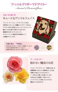 送料無料プリザーブドフラワーギフト結婚祝いまるで絵のような花Gift動物『35種から選べるアニマルフラワーボックススタンド』ギフト【花】プリザ祝いクリスマス誕生日プレゼント女性犬猫うさぎ母の日