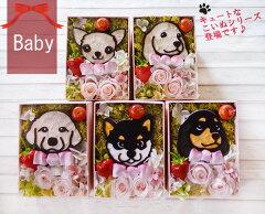 【送料無料】Baby Animal 子犬のプリザーブドフラワー ギフト Gift ピンク フラワーボックスで出産祝いにも最適♪チワワ、ダックス、ゴールデンレトリバー、黒 柴犬 誕生日プレゼント 女性 敬老の日【RCP】お見舞い