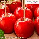 【サンふじりんご飴Aセット】TV等のメディアで人気の本格りんご飴。代官山 4個セット【プレミアムプレーン2個、シナモンシュガー1個、ココア1個】セット