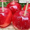 【サンふじりんご飴Bセット】青森県産 サンふじりんご使用 りんご飴 candy appleりんご飴【プレーン4個セット】