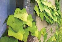 DCMR 文具 木 の 葉 形 付箋 まるで 本物 の 葉っぱ のよう 机の上 に おいて おしゃれな インテリア にもなる ! 紅葉 する 葉 付箋 シリーズ ( レッド )