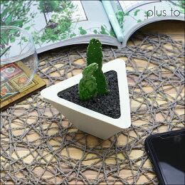 インテリアお洒落観葉植物ギフトお祝い土を使わないTRYANGLE【1個】