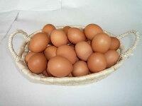 【九州産特選地卵】貴黄卵20個セット(Lサイズ)【卵の王様・貴黄卵】