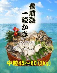 【送料無料】【福岡県産】豊前海一粒牡蠣殻付きかき/牡蠣3kg(中粒/45〜60個入り)【産地直送】