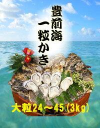 【送料無料】【福岡県産】豊前海一粒牡蠣殻付きかき/牡蠣3kg(大粒/24〜45個入り)【産地直送】