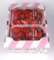 3Lサイズのブランド苺【おさなご】福岡県みやま市産EM栽培【有機肥料栽培】イチゴさがほのか