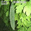沖縄在来の品種で果長25〜30cm、果重は250g位になり、果径は6〜8cmで果色は濃緑色。沖縄中長ゴ...