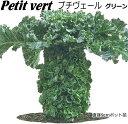 マスダ交配プチベール苗非結球芽キャベツプチベール(10,5cmポット)苗