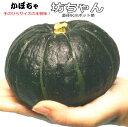 電子レンジで丸ごと5〜8分過熱するだけで美味しく食べられる。坊ちゃんかぼちゃ苗