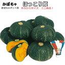 高粉質のミニかぼちゃ!手のひらサイズの差別化商品!ほっこり姫かぼちゃ苗