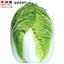 なえ屋で買える「白菜 苗 はるさかり 9cmポット苗 ハクサイ 【ラッキーシール対応】」の画像です。価格は81円になります。