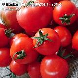 実生 中玉トマト Mr,浅野のけっさく 9cmポット苗 【ラッキーシール対応】○